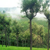 Ooty - Coimbatore