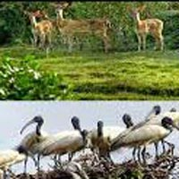 Kolkata - Guwahati - Shillong - Cherrapunji - Kaziranga National Park