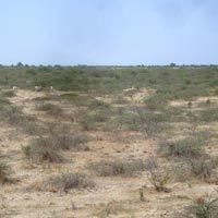 Little Runn of Kutch - Bhuj -  White Runn of Kutch - Hodka -  Dhordo - Nakhatrana - Mandvi Beach
