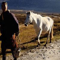 Thimphu - Wangdue - Punakha - Paro