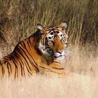 Delhi - Panna National Park - Khajuraho - Jhansi