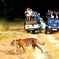 Corbet National Park - Delhi - Ranthambore - keoladeo Ghana National Park - Agra - Jhansi - Khajuraho - Bandhavgarh - Kanha - Nagpur