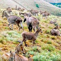 Chennai - Mettupalayam - Madhumalai - Bhandipur - Mukurthy - Ooty - Annamalai Wildlife Sanctuary - Munnar - Periyar - Cochin