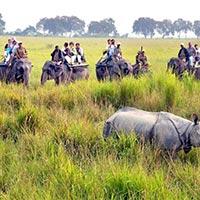 Delhi - Sariska - Jaipur - Ranthambore - Bharatpur - Agra - Khajuraho - Bandhavgarh - Kanha - Nagpur - Bhubaneswar - Kolkata - Guwahati - Kaziranga - Guwahati - Goa