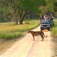 Nagpur - Kanha National Park - Bandhavgarh National Park - Jabalpur - Agra - Bharatpur - Ranthambore - Jaipur - Mumbai - Goa