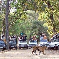 New Delhi - Jaipur - Ranthambore - Agra - Gwalior - Shivpuri - Orchha - Khajuraho - Bandahavgarh - Kanha - Raipur