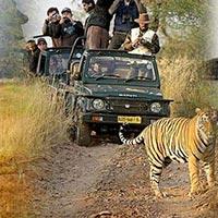 New Delhi - Corbett - Agra - Nainital