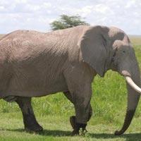 Lake Nakuru - Masai Mara - Serengeti - Ngorongoro - Lake Manyara - Tarangire - Arusha - Zanzibar