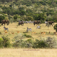 Nairobi - Ndaragwa - Maasai Mara - Kwale - Mombasa