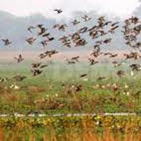 Guwahati - Pobitora Wild Life Sanctuary - Kaziranga National Park