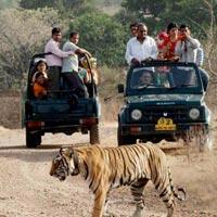 Delhi - Jaipur - Ranthambore - Agra - Bandhavgarh - Kanha - Jabalpur - Mumbai