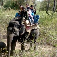 Jabalpur - Kahna - Bandhavgarh - Umaria - Agra - Bharatpur - Ranthambore - Delhi - Corbett
