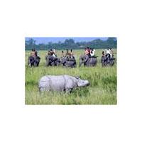 Guwahati - Kaziranga National Park - Guwahati