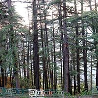 Dehradun - Mussoorie - Dhanaulti