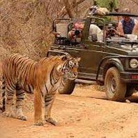 Jaipur - Chittorgarh - Ranthambore
