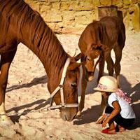 Little Petra - Petra - Dana Nature Reserve - Wadi Rum - Aqaba