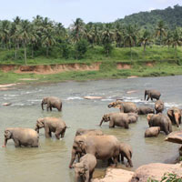 Negombo - Pinnawala - Kandy - Ramboda - Nuwara eliya - Yala - Galle - Hikkaduwa