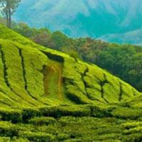 Cochin - Kalady - Guruvayur - Alleppey - Periyar - Munnar - Trivandrum - Suchindram - Kanyakumari