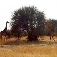 Harare - Mana Pools National Park