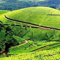 Cochin - Munnar - Thekkady - Allepey - Kovalam