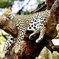 Lataguri - Alipurduar - Jaldapara Forest Wildlife Sanctuary - Jayanti Forest