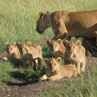 Nairobi - Nakuru - Maasai Mara