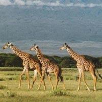 Nairobi - Nyeri - Chogoria