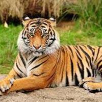Mumbai - Nagpur - Kanha National Park - Bandhavgarh National Park - Khajuraho