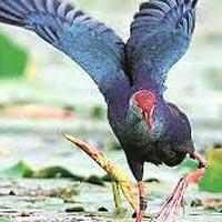 Amritsar - Keshopur Wetland (Gurdaspur) - Hari ke Pattan - Kanjli Wetland - Ropar