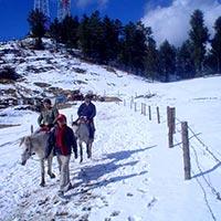 Chail - Kufri - Fagu - Shimla