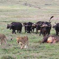 Tarangire National Park - Serengeti National Park - Ngorongoro Crater