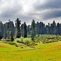 Delhi - Srinagar - Yusmarg - Pahalgam - Gulmarg - Sonamarg