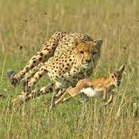 Mombasa - Maasai Mara - Lake Nakuru - Nairobi