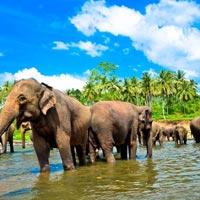 Pinnawala Elephant Orphanage - Kandy - Nuwara Eliya - Colombo