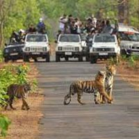 Nagpur - Tadoba National Park- Nagzira Wildlife Sanctuary