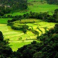 Bangalore - Coorg - Wayanad - Mysore