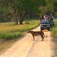 Bandhavgarh - Kanha - Pench