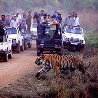 New Delhi - Sawai Madhopur - Ranthambore - Bharatpur - Umaria - Bandhavgarh - Kanha - Corbett