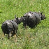 Guwahati - Kaziranga National Forest - Shillong - Cherrapunji