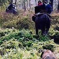 Rajabhatkhawa - Buxa - Jaldapara National Forest - Lataguri - Garumara National Forest - Samsing - Suntaleykhola - Jhalong - Bindu - Murti