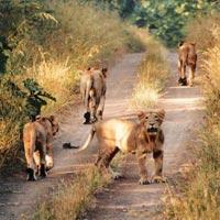 Bhavnagar - Palitana - Gondal - Junagadh - Gir National Park - Rajkot
