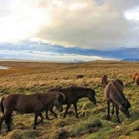 Reykjavík - Seljalandsfoss - Skaftafell - Lake mývatn - Ásbyrgi - Jökulsárgljúfur national park - Goðafoss - Akureyri - Ilulissat - Sermeq kujalleq glacier - Disko bay