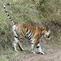 Nagzira Tiger Reserve