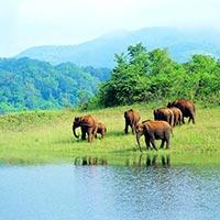 Cochin - Munnar - Thekaddy - Alleppey