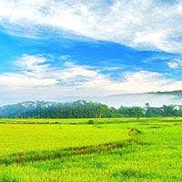 Kochi - Munnar - Thekkady - Kumarakom