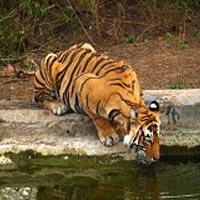 Sariska Tiger Reserve - Alwar - Rajasthan