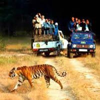 Ramnagar - Jim Corbett National Park