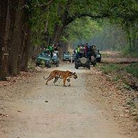 Delhi - Corbett National Park - Bandhavgarh - Sawai Madhopur - Ranthambore - Kaziranga - Guwahati - Delhi