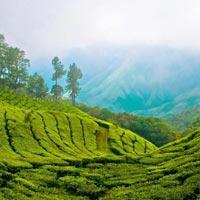 Cochin - Munnar - Periyar - Alleppey - Trivandrum - Kovalam