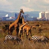 Amboseli - Tsavo East - Tsavo West